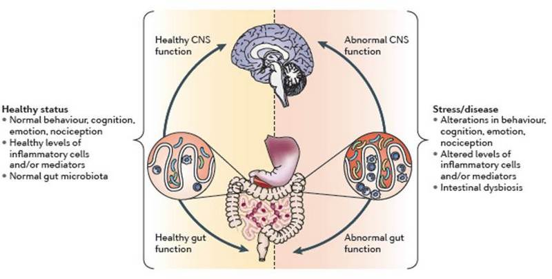 Integral Options Cafe: Paul Whiteley: The Gut-Brain Axis and